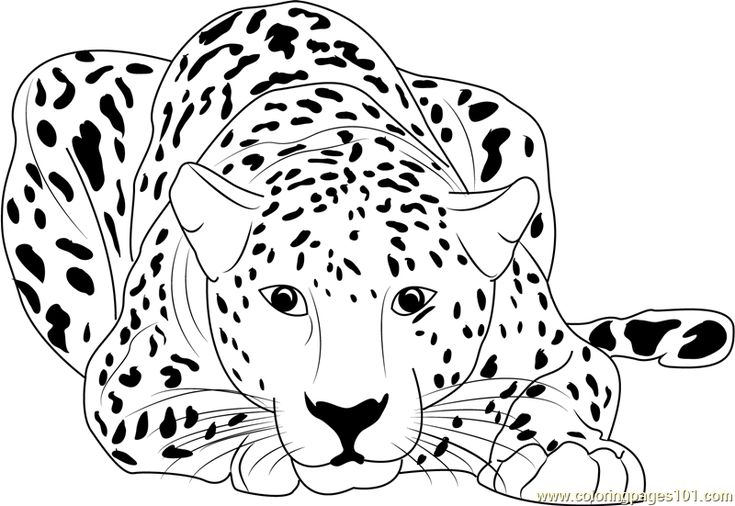 cheetah sitting coloring free printable cool to print the heart human color toy shoppe coloring pages Cheetah Coloring Page