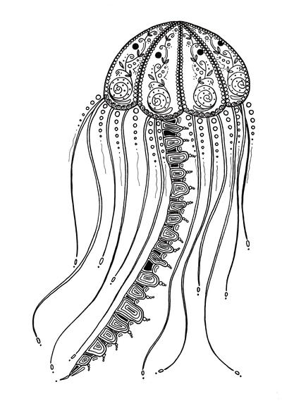 delicate jellyfish adult coloring favecrafts large400 id dinosaur rex rainbow crayon coloring pages Jellyfish Coloring Page