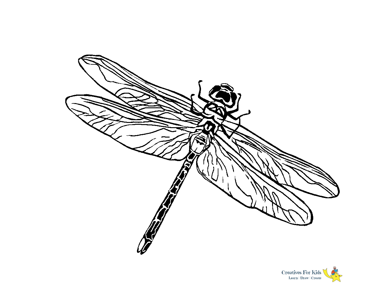 dragonfly coloring kiddo to train your dragon washable dry erase markers pinegreen color coloring pages Dragonfly Coloring Page