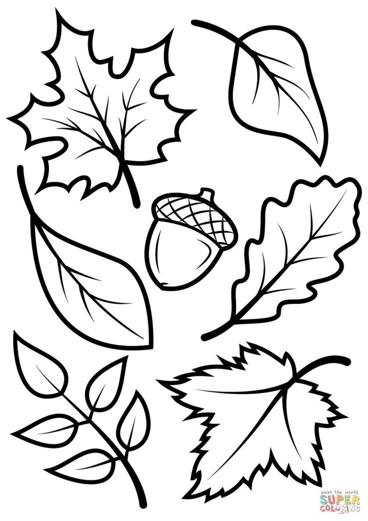 fall coloring for kids leaves and acorn free printable pag sheets leaf student drawing coloring pages Fall Coloring Page