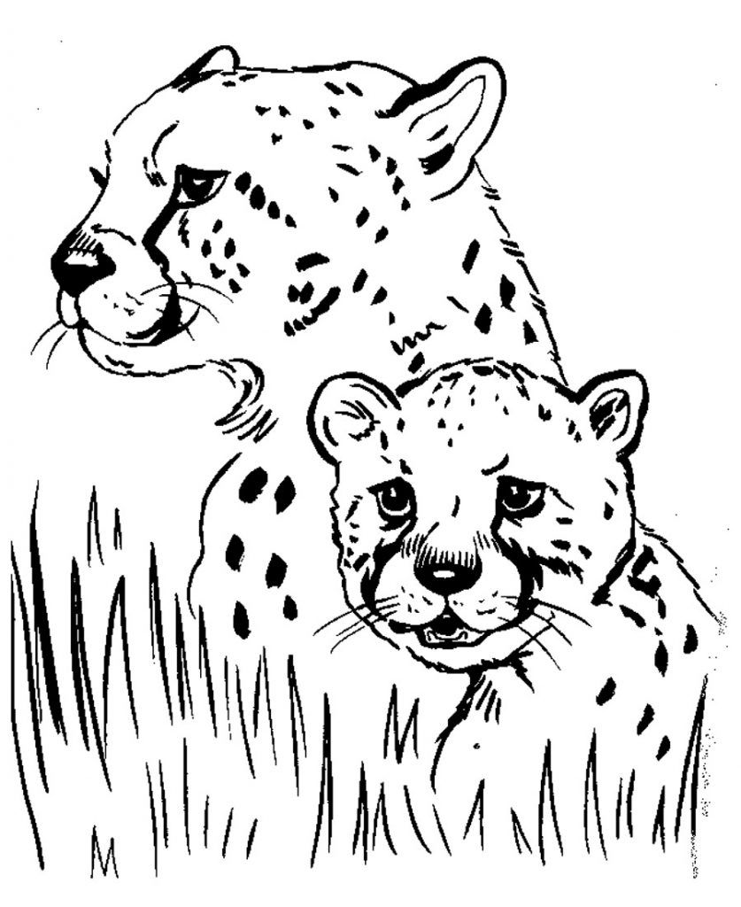 free printable cheetah coloring for kids pictures of animals animal books drawing games coloring pages Cheetah Coloring Page