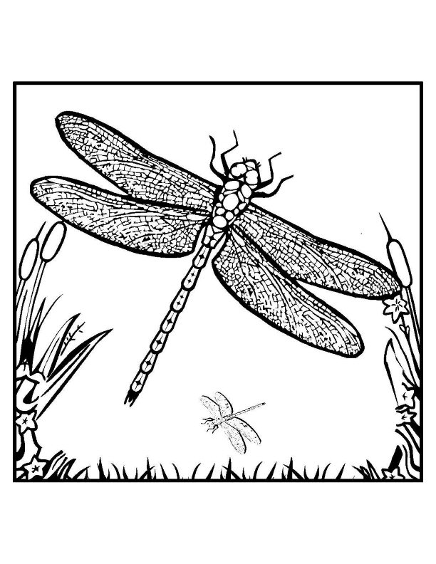 free printable dragonfly coloring for kids color of easel with storage washable dry erase coloring pages Dragonfly Coloring Page