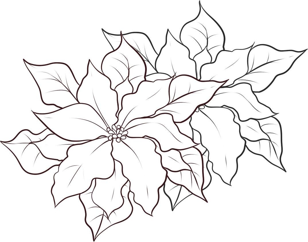 free printable poinsettia coloring for kids poinsetta color learning sheet creative coloring pages Poinsetta Coloring Page