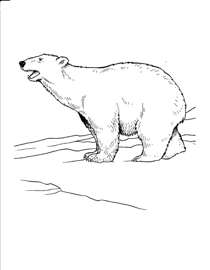 free printable polar bear coloring for kids pictures elephant sheets cake sheet coloring pages Polar Bear Coloring Page
