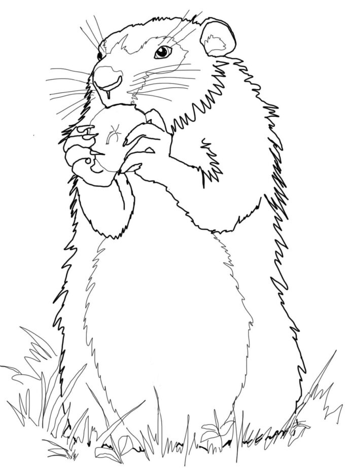 groundhog coloring best for kids realistic remove highlighter from book define light coloring pages Groundhog Coloring Page