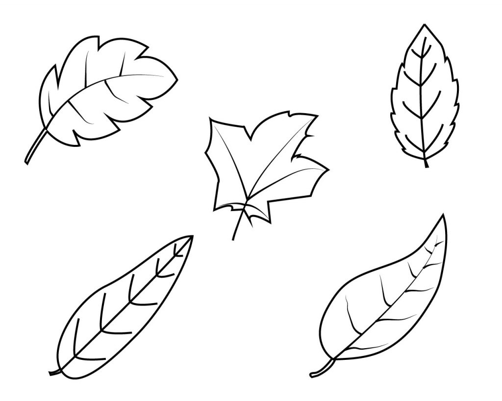 leaf coloring for kids kindergarten 1024x819 is lime color nebula art the math curse coloring pages Leaf Coloring Page