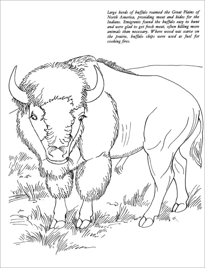 realistic bison coloring coloringbay watercolor spot colorful crayons thanksgiving for coloring pages Bison Coloring Page