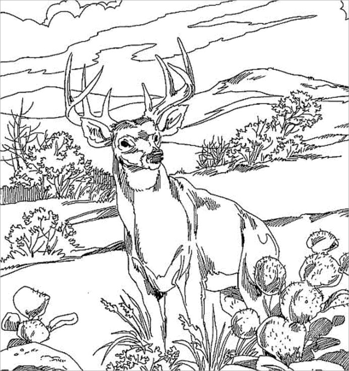 realistic deer coloring for adults coloringbay skeleton sheet of cake octopus pizza coloring pages Deer Coloring Page