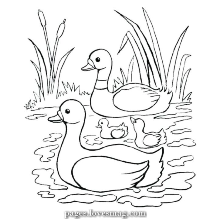 the best child duck coloring to print animal farm books pumpkin colouring free halloween coloring pages Duck Coloring Page