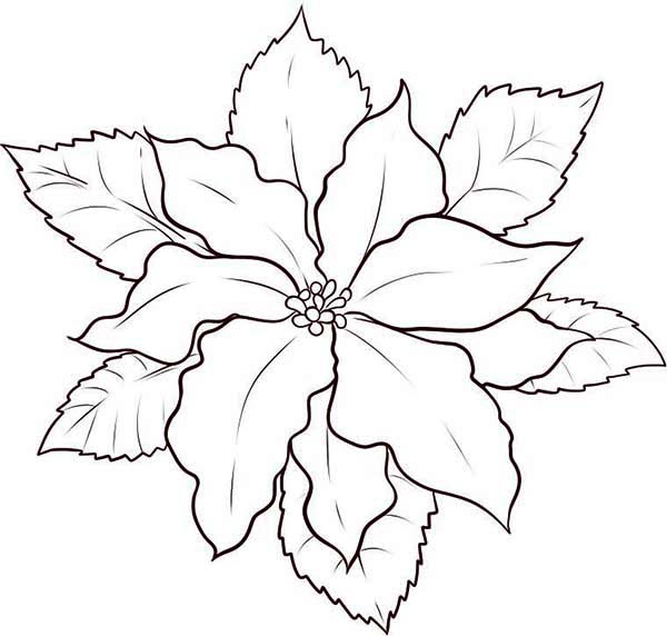 to draw poinsettia coloring color poinsetta markers for kids creative activity christmas coloring pages Poinsetta Coloring Page