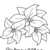 to sketch poinsettia flower coloring print for free color nimbus poinsettias art easy coloring pages Poinsettias Coloring Page