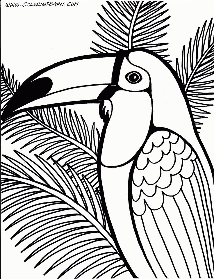 toucan coloring home aiqbb6xkt thanksgiving countdown chain different cars letter coloring pages Toucan Coloring Page