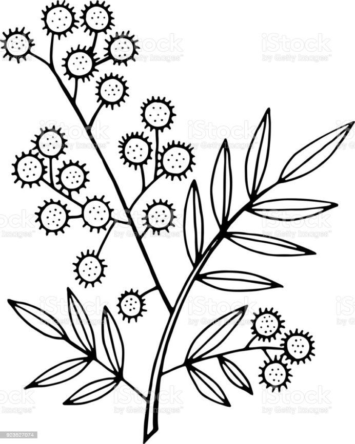 acacia tree silhouette vector art icons and graphics for free coloring three basic colors coloring pages Acacia Tree Coloring Page