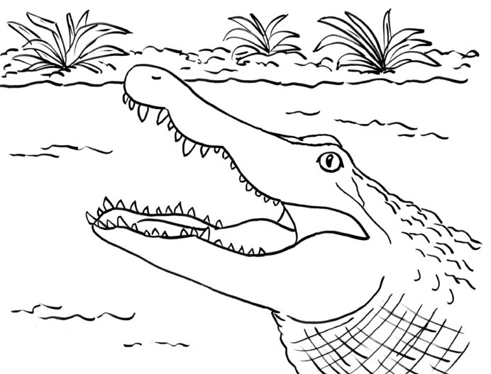 alligator coloring art starts plastic markers halloween craft ideas adults watermelon coloring pages Alligator Coloring Page