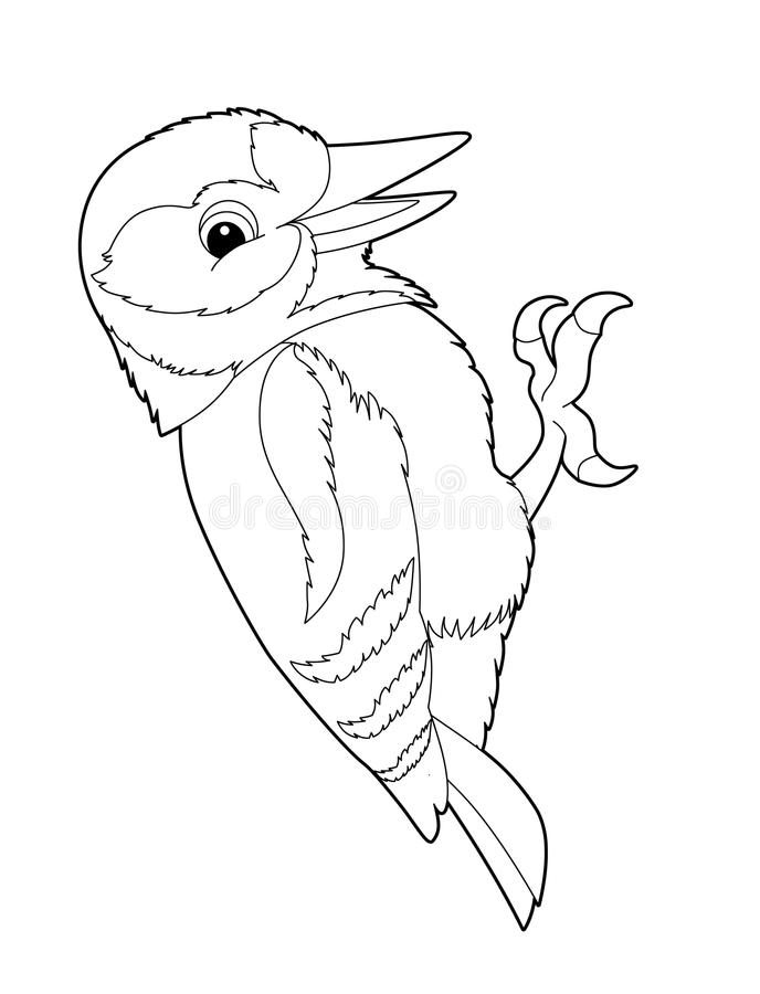 animal woodpecker coloring stock illustration of shape drawing beautiful children coloring pages Woodpecker Coloring Page