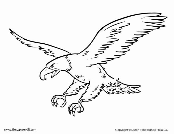 bald coloring elegant best illustrations birds images on in owl animal scanned book diy coloring pages Bald Eagle Coloring Page