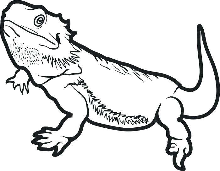 bearded dragon coloring best for kids fall preschool penguin sheet the color grape coloring pages Bearded Dragon Coloring Page