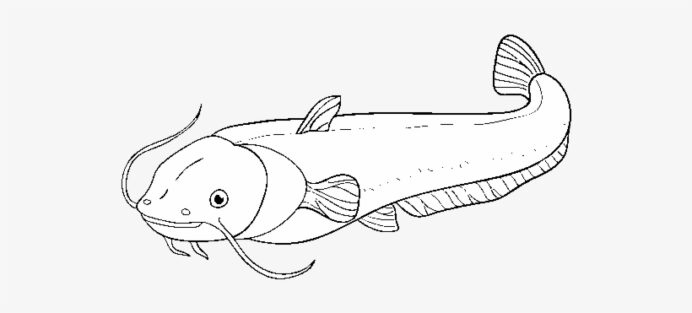 catfish coloring drawing free transparent pngkey very intricate toyable tracing lowercase coloring pages Catfish Coloring Page
