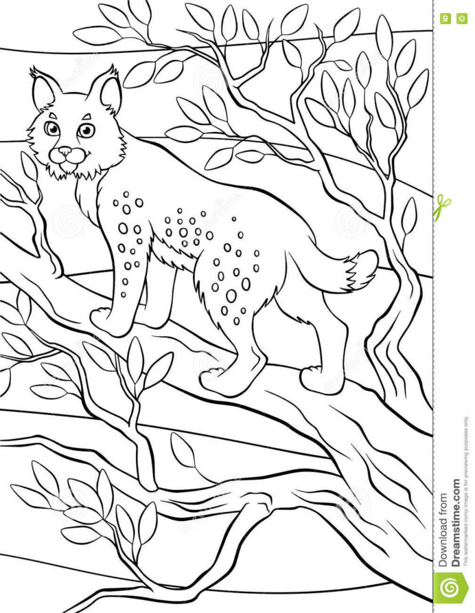 coloring animals little cute lynx stock vector illustration of animal bobcat stands coloring pages Bobcat Coloring Page