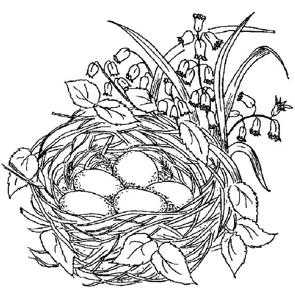 coloring birds beautiful bird nest best place to color drawings animal dinasaur pagr coloring pages Bird Nest Coloring Page