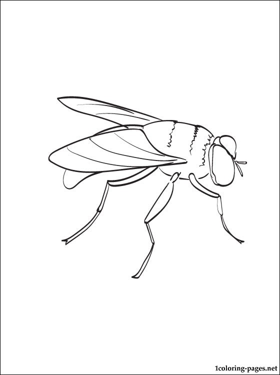 fly coloring free printed mazes sheets cursive letters capital crayola art with edge coloring pages Fly Coloring Page