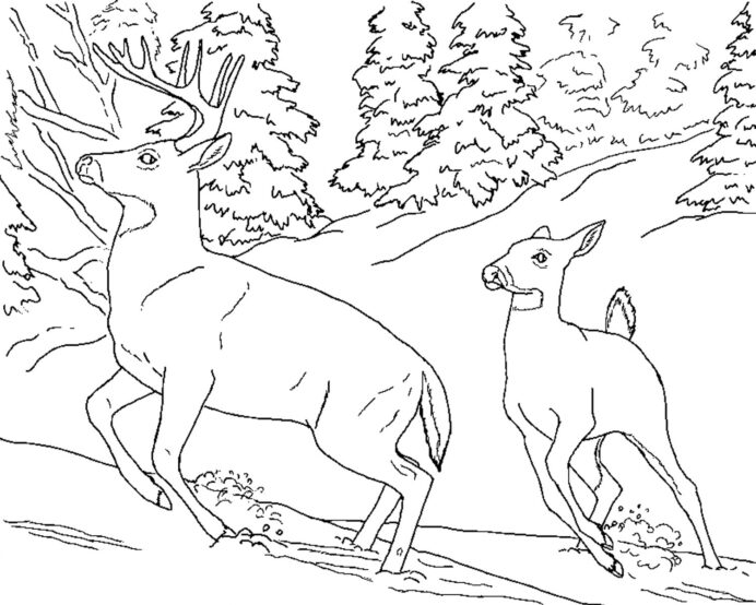 free printable deer coloring for kids tailed plants animal activity sets layered paper coloring pages Free Printable Deer Coloring Pages