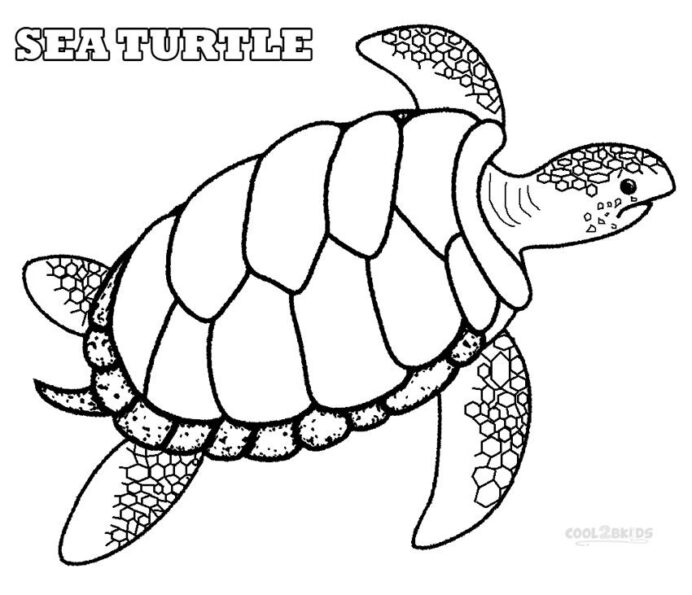free printable sea turtle coloring and malvorlagan steam gifts for kids cerulean crayol coloring pages Green Sea Turtle Coloring Page
