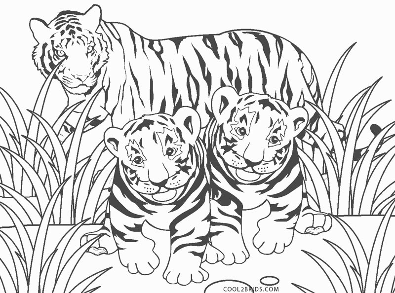 free printable tiger coloring for kids baby short shoji screen robin alloy book image coloring pages Coloring Page Tiger