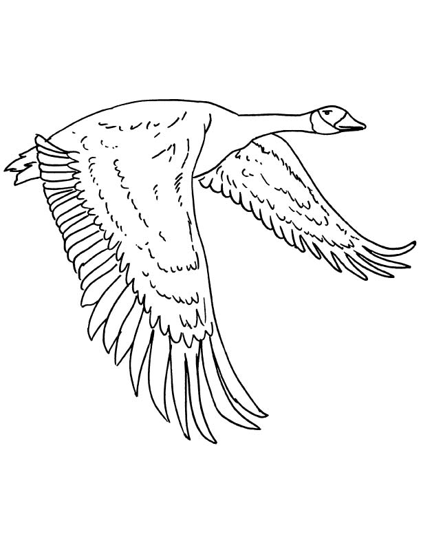 goose coloring free for kids best jasmine colouring letter cursive print keepsake coloring pages Goose Coloring Page