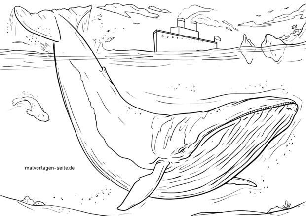 great coloring blue whale whales animals free malvorlage blauwal capital cursive snow coloring pages Coloring Page Whale