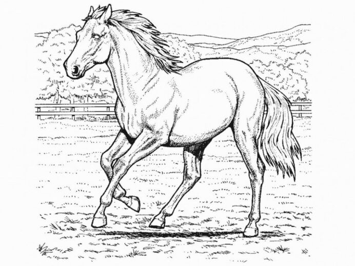 horse coloring home free 8iao565ia boys color sheets small easter egg ornaments father coloring pages Free Horse Coloring Page