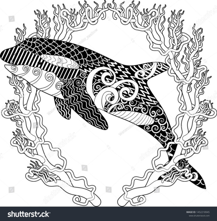 killer whale high details adult antistress stock vector royalty free orca coloring with coloring pages Orca Coloring Page