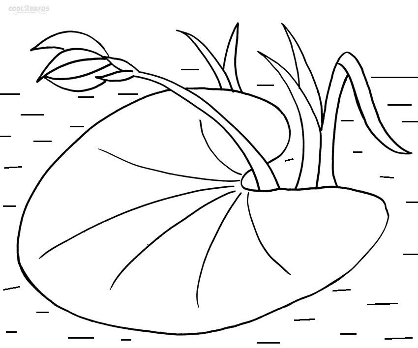 lily pad drawings google search drawing pads lilies lilly coloring scissors and glue coloring pages Lilly Pad Coloring Page