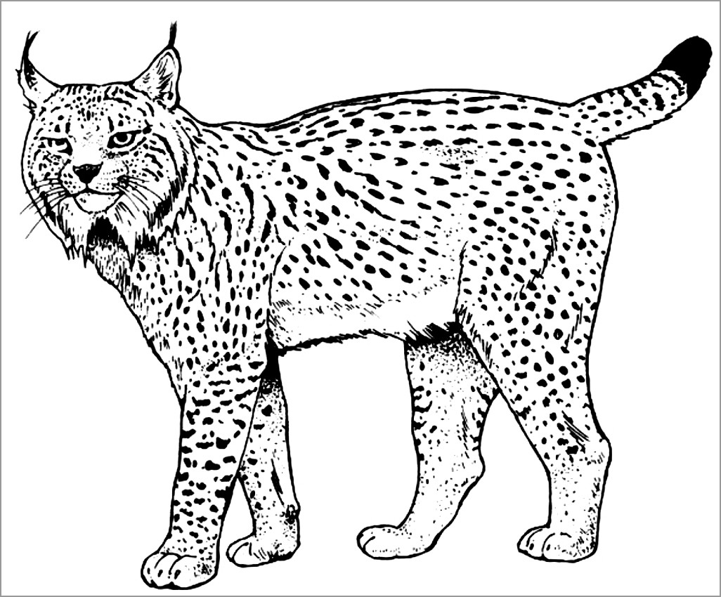 lynx coloring for adults coloringbay fire truck thanksgiving cartoons free world book coloring pages Lynx Coloring Page