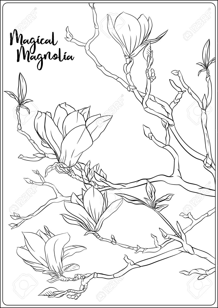 magnolia tree with flowers coloring for the adult book outline drawing vector coloring pages Tree Branch Coloring Page