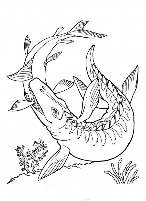 mosasaurus coloring home di6apez7t decorative cardstock steam guess the color game coloring pages Mosasaurus Coloring Page