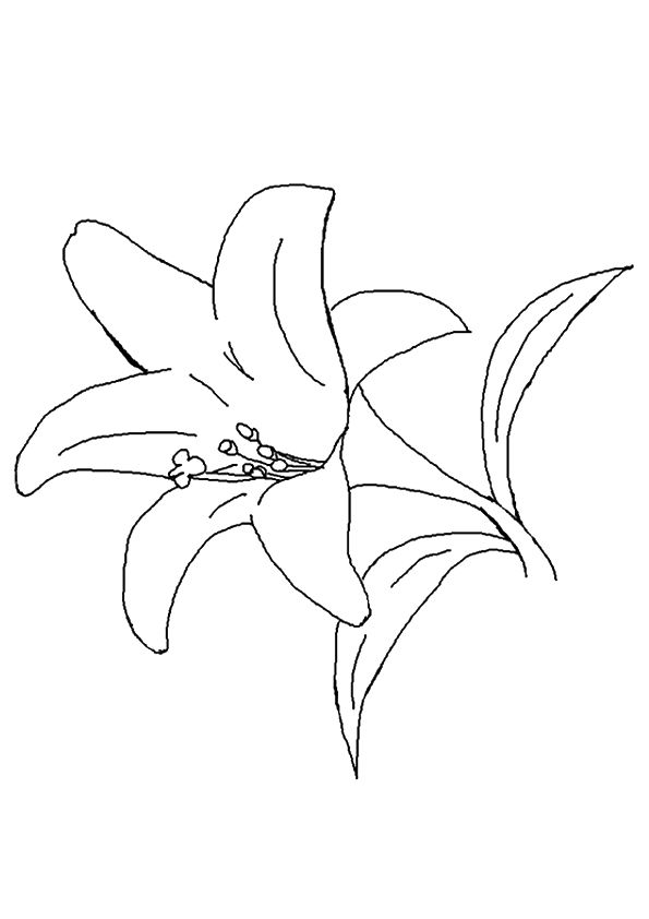 parentune free printable lily coloring pictures for preschoolers kids lilly the sketch in coloring pages Lilly Coloring Page