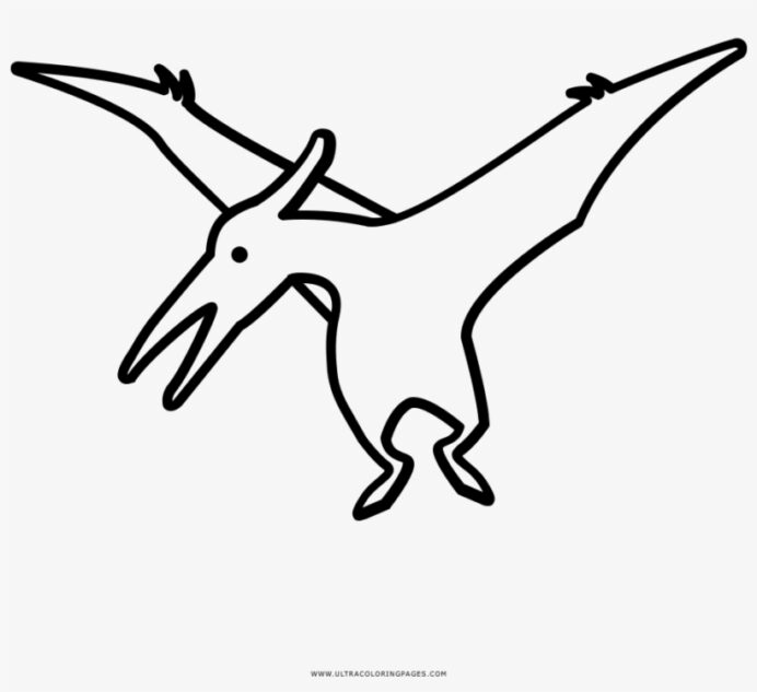 pterodactyl coloring book transparent 1000x1000 free on nicepng pteradactyl printable coloring pages Pteradactyl Coloring Page