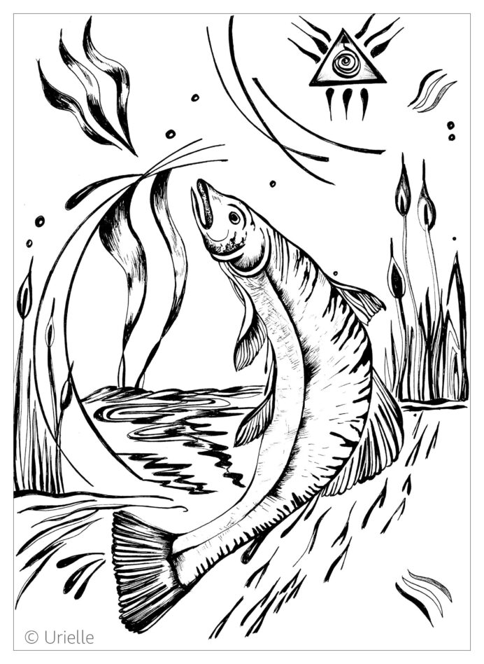 salmon fishes adult coloring skin markers bulk names for crayons remove paint pen disney coloring pages Salmon Coloring Page