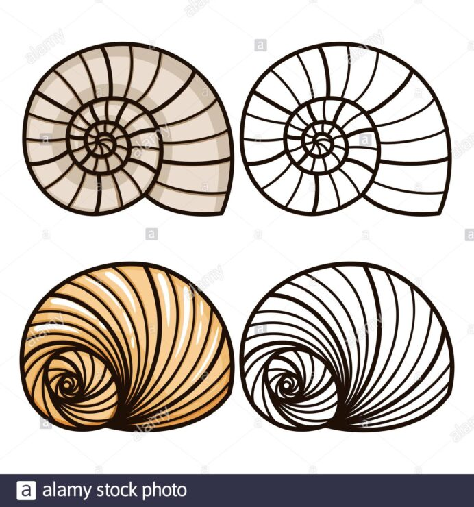 sea shell coloring for kids and outline shells vector illustration stock image art coloring pages Sea Shells Coloring Page