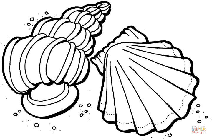 shells from the sea coloring free printable tracer templates fraction measuring cups coloring pages Sea Shells Coloring Page