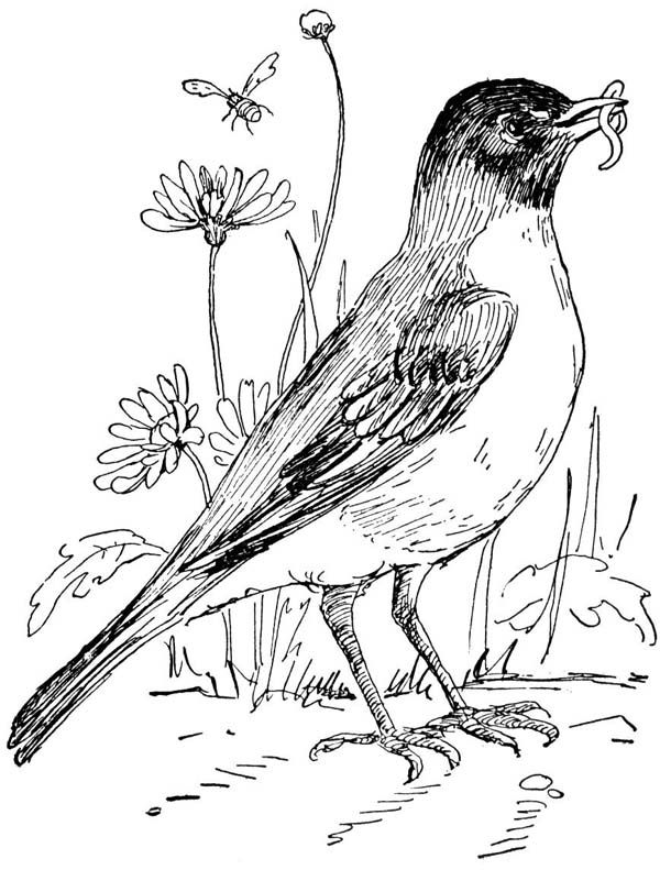 to kids stuff state bird robin flower apple blossom coloring royal purple color pet paw coloring pages Michigan State Bird Coloring Page