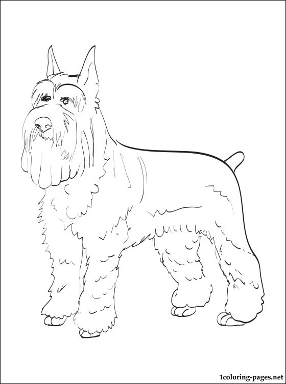 miniature schnauzer coloring color printables pitcures for kids crayon candy totem pole coloring pages Schnauzer Coloring Page